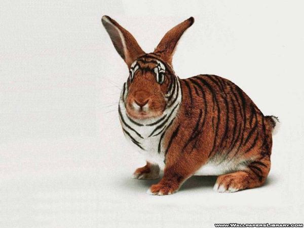 tiger-rabbit-funny-wallpaper-13